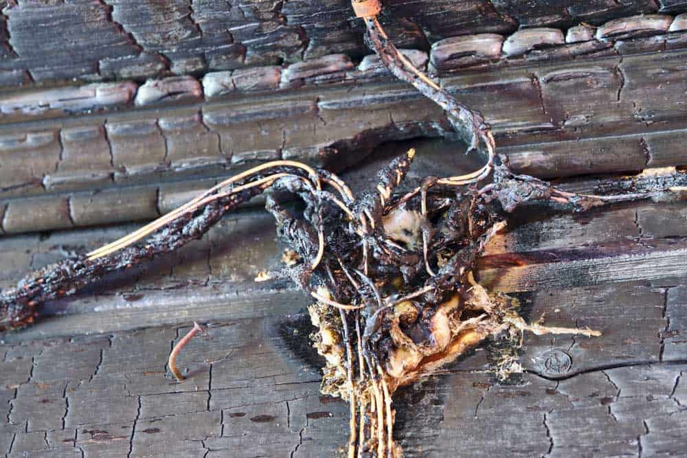 Charred electrical wires.